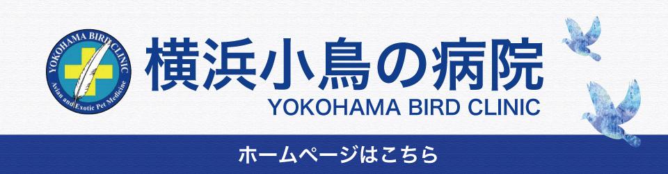 横浜小鳥の病院ホームページ